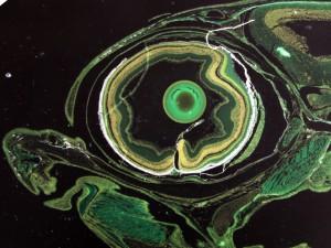 Fig 7 b eye